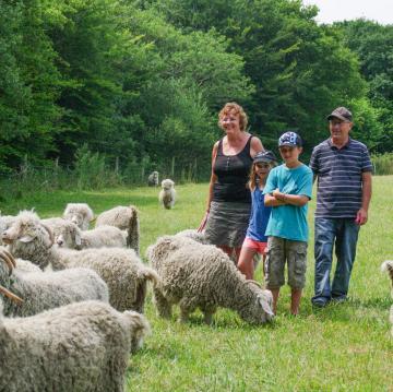 Visitez la ferme des chèvres angora en famille