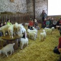 Les enfants dans la chèvrerie