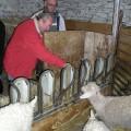 Animaux à la chèvrerie