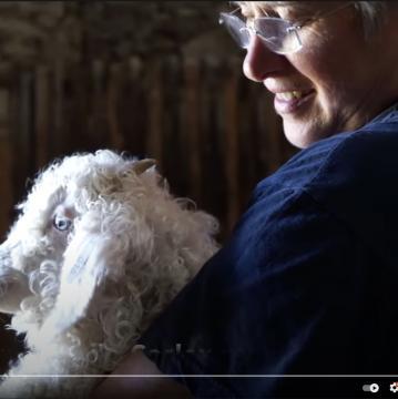 """Vidéo """"Anne Marie et ses chevreaux"""""""