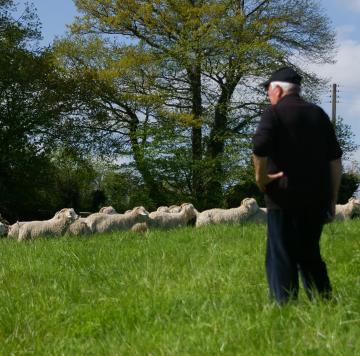 Les visites au Mohair du Pays de Corlay