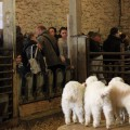 Photos : Printemps à la ferme (2012)