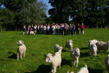 Visite aux chèvres angora adultes