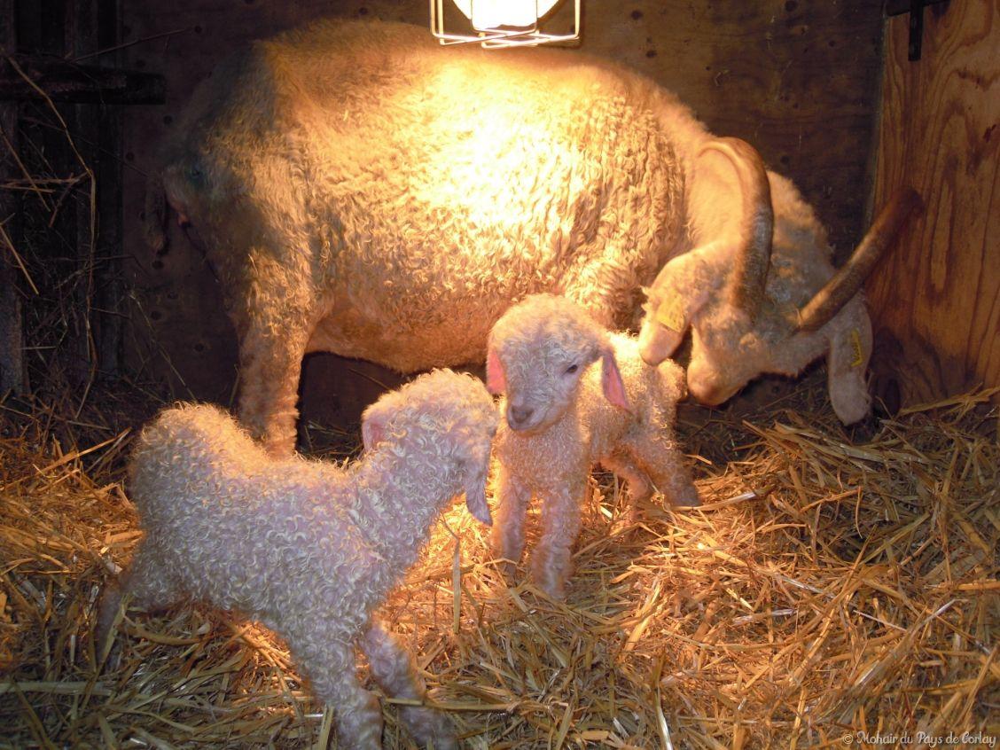 Quelques minutes après notre naissance nous sommes déjà debout