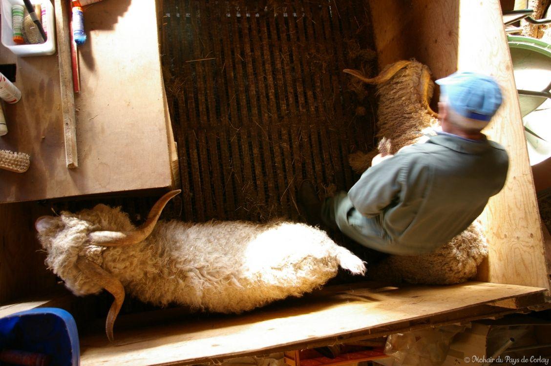 Brossage pour enlever le foin et la paille coincés dans les fibres