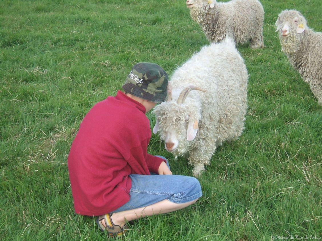 Les chèvres n'ont pas peur des humains